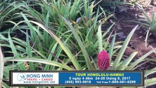 Hong Minh Travel Tour Honolulu Hawaii