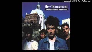 Watch Chameleons On The Beach video