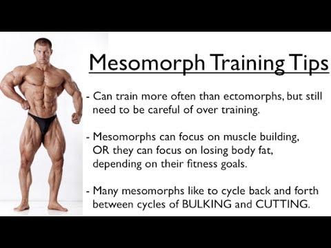 Ectomorph, Endomorph or Mesomorph - Training for YOUR Body ...