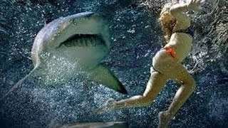 Акулы нападают на людей-Sharks attack humans