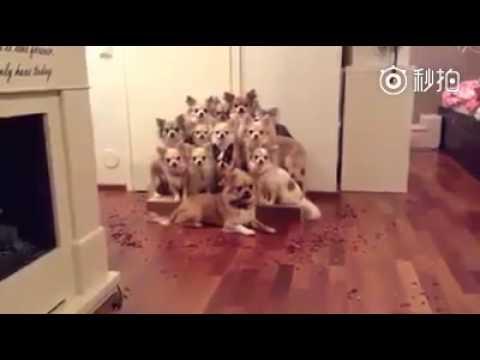 ハイチーズ!犬たちが写真を撮る時のポーズが天才過ぎる団体芸!