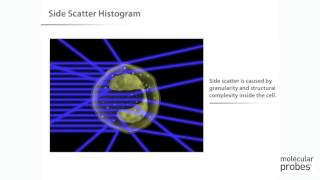 Molecular Probes Tutorial Series—Introduction to Flow Cytometry