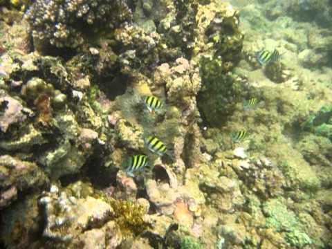 Sri Lanka,ශ්රී ලංකා,Ceylon,Coral Reef (26)