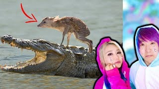 UNBELIEVABLE Animals That Saved Other Animals!