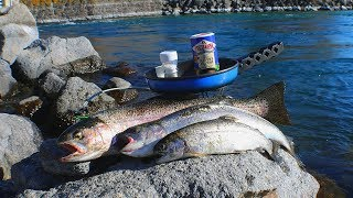 Catch and Cook Rainbow Trout (Fish Sandwiches) + First Sturgeon of the Year!