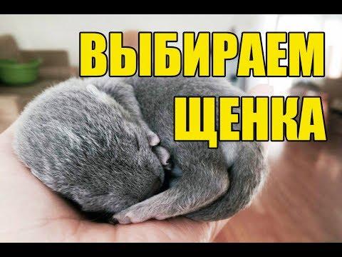 Шубы из песца купить интернет - магазине с доставкой по Москве