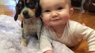 funny Babies and Puppies Playing Together Compilation 2016 , best babies vs dogs animals 2016