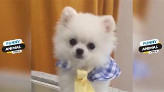 Cutes dogs - Cutest dog in the world - Cute dogs clips 2019