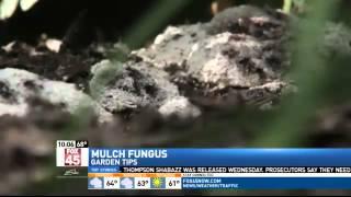 """""""Dog Vomit"""" Mold Taking Over Mulch, Gardens"""