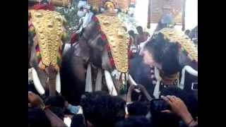 KATTAKAMBAL POORAM 2015/ STAR ELEPHANTS