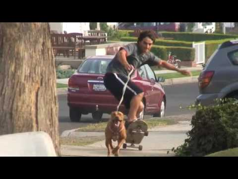 Dog pulling Skateboard at High Speed! HD
