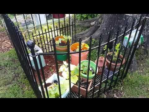 Carol's Garden/Farm (May)