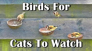 Videos of Birds For Cats To Watch - Entertainment For Your Cat