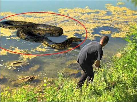 GIANT SNAKE ATTACKS FISHERMAN ! - YouTube