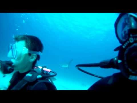 Shark dive in Nassau Bahamas