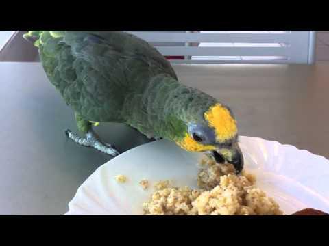 Наглый попугай, оставил меня без обеда