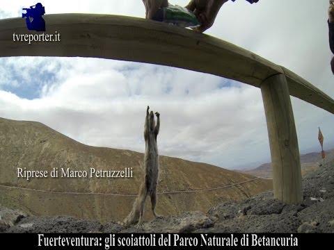 FUERTEVENTURA, GLI SCOIATTOLI DEL PARCO NATURALE DI BETANCURIA