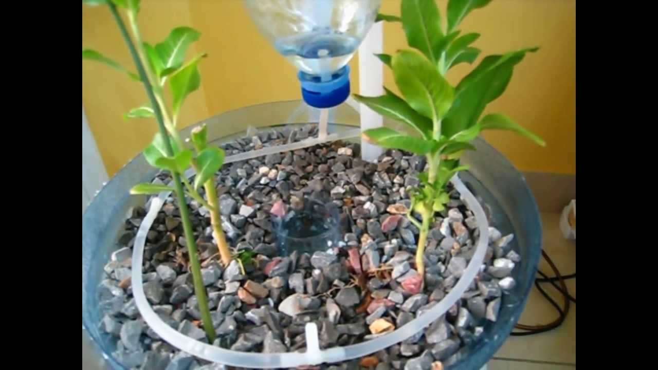 Pet Bottle Aquaponics System A Beginner How To Video On