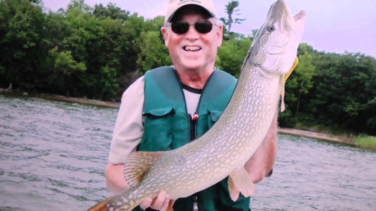 Muskie and northern best fish identification tips and for Fishing tips and tricks