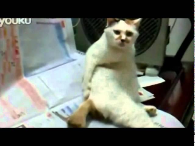- YouTube Кот чешется как человек - YouTube Народные приметы. Серьёзные, к