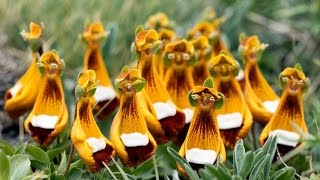 Top 10 Strange Looking Flowers in the World