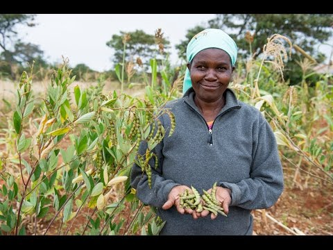 Food For Life - Ecological Farming in Kenya