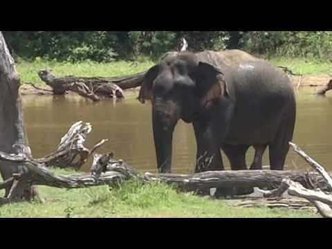 Wild Animal Safari In Yala National Park   Sri Lanka