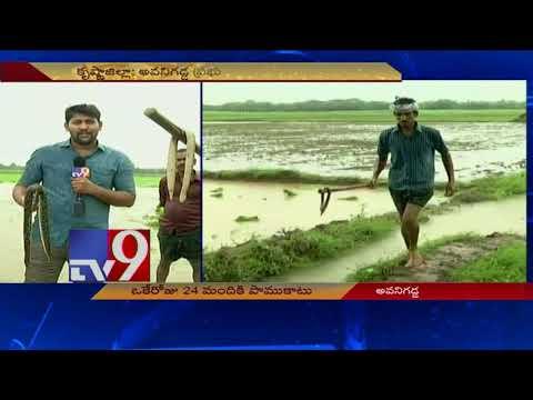 Snakes scare Avanigadda farmers - TV9