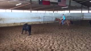 Lizzy- Jared Lesh Cowhorses