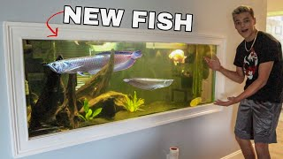 RARE AROWANA FISH for My AQUARIUM!!!