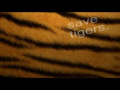 MS Dhoni IPL 2010 captain support TIGERS - Only 1411 left - Shortfilm