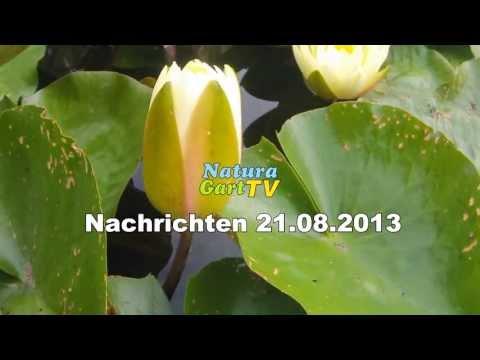 NaturaGart Nachrichten 21.08.2013