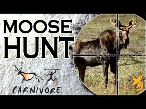 Carnivore: Moose hunt for meat in Newfoundland