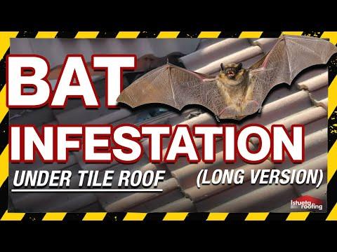 Murcielagos - Murciélagos en el tejado