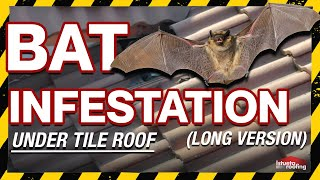 Bat Infestation Under Tile Roof (Long Version)- Roofing Miami, FL- Istueta Roofing