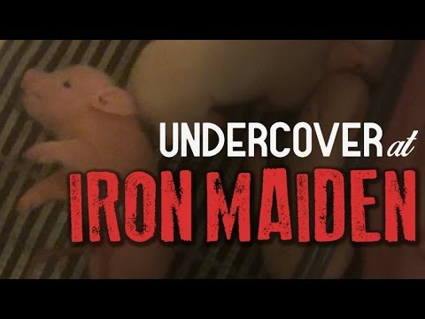 Pigs Suffer at IRON MAIDEN