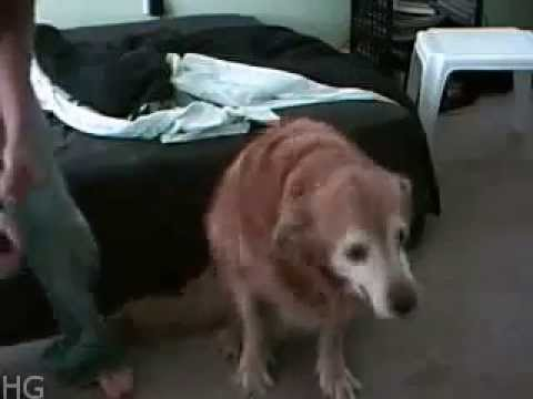 Dog Shakes Booty and Dances to