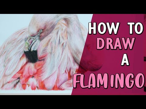 HOW TO DRAW A REALISTIC FLAMINGO | Coloured Pencil Tutorial Step by Step