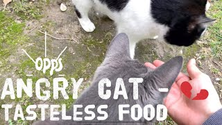 Angry Cat - When have tasteless food   Cat Food   Funny Cat Video   Cat Meowing   Dog and Cat   Vlog