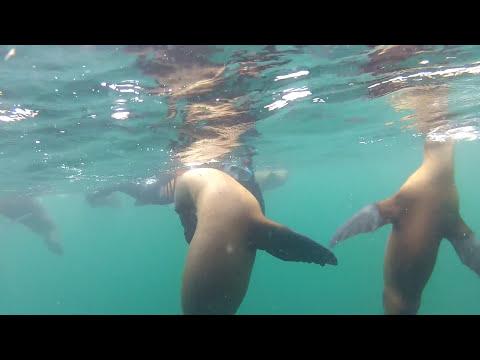 Nadando con Lobos Marinos (Puerto Madryn)