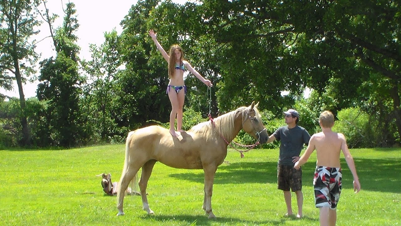 play horses for sale