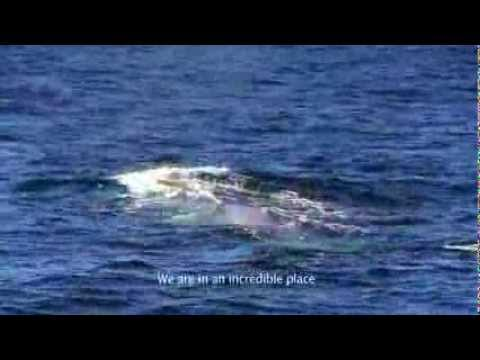 The Corcovado Gulf: a unique ecosystem for blue whales in Chile