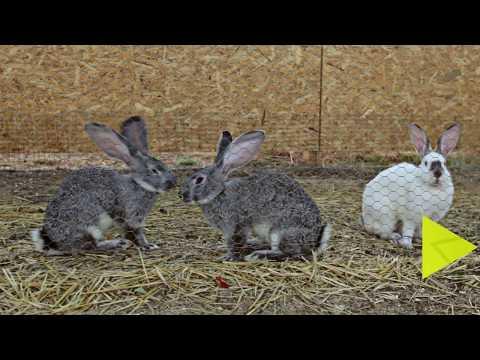 Кроликопарк в Крыму!!! Кроликоферма в Червонном.