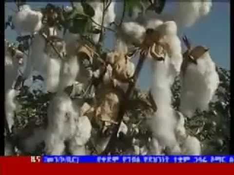 Ethiopia plans to expand cotton production to meet demand