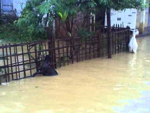 Assam flood 26-06-2012 (a masti video) (HD)