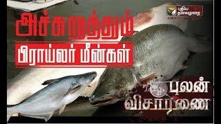 Pulan Visaranai: அச்சுறுத்தும் 'ப்ராய்லர் மீன்'! எச்சரிக்கை ரிப்போர்ட் #Fish #BroiledFish | 09/02/19