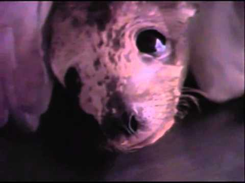 SeaWorld - Make Contact Series - George's Rescue -  Commercial - 1980s -1990s