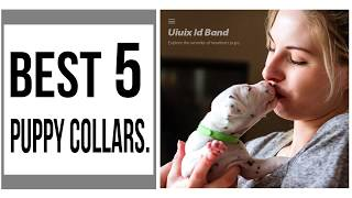 Buy Cute Collars For Your Puppies || Best 5 Puppy Collars In 2019 || puppy collar reviews.