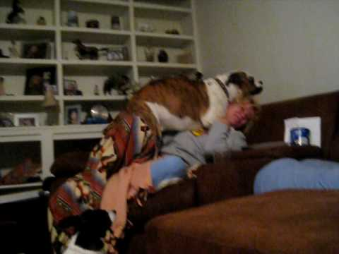 Dog Molesting Mom video