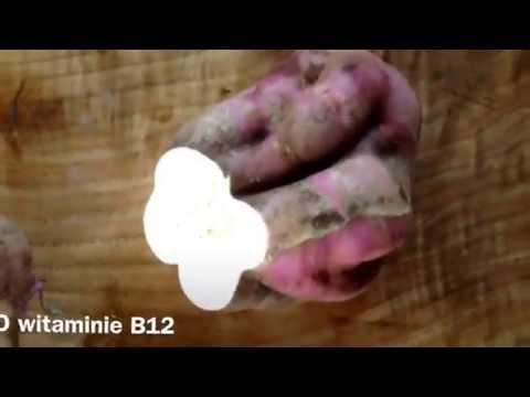 Cz.5 - Co jem w ciagu dnia - Witamina B 12 - Maria Bucardi dieta weganska ogrod egzotyczny